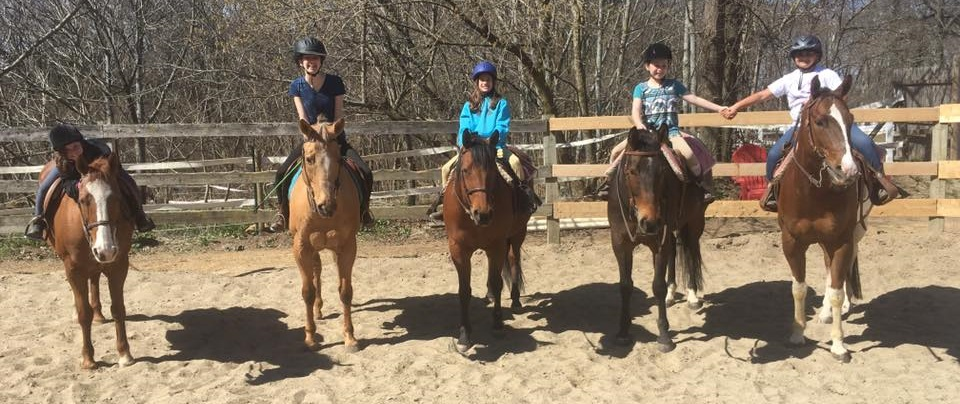 Group Horsemanship Lessons