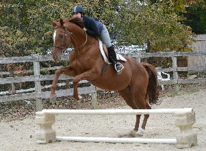 Horsemanship lessons in jumping